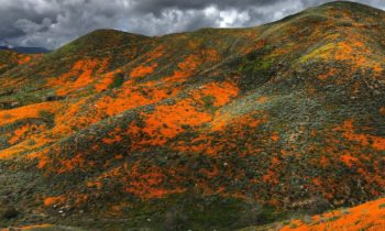 Orange Lush: California's 'Superbloom' Amuses From the Air