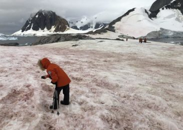 Because of record highs , Ghostly 'raspberry snow' portions of Antarctica